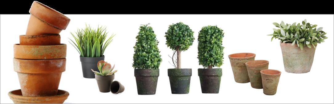 terracotta plant.png